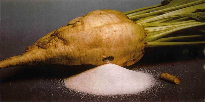 عملیات تولید شکر از چغندر قند(مقدمه)