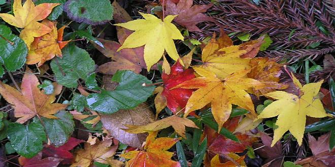 شیمی رنگ های پاییزی